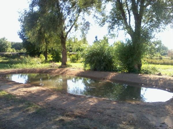 Amphibienteich im Mombacher Unterfeld.